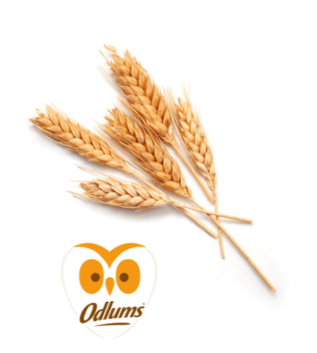 odlums logo and product