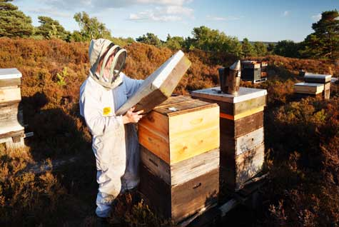 Rowse honey bee farmer