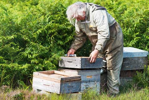 Rowse Honey Beekeeper in a field